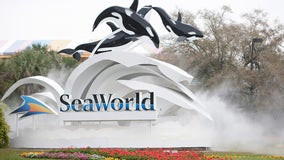 SeaWorld CEO resigns after less than one year on the job