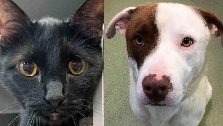 3910c4df-Dallas animal services pets_1563230228918.png.jpg