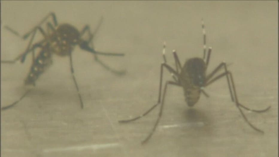 wjbk-mosquitoes-091819.jpg