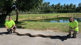 Record-breaking catch: Hunters capture 18-foot Burmese python in South Florida