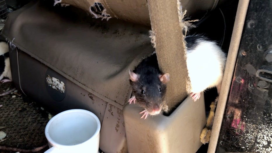 140-Rats-Relinquished-2.jpg