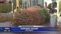 Christmas tree goes up in Fort Worth's Sundance Square