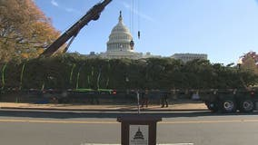 Capitol Christmas Tree arrives in nation's capital