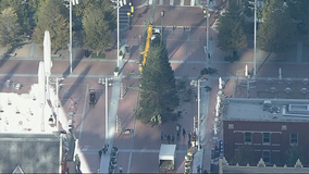 50-foot Christmas tree goes up in Fort Worth's in Sundance Square