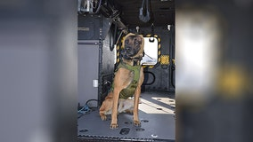 Specialized canine auditory gear developed to protect military dogs from hearing loss
