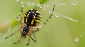 Spider and insect populations are declining at 'frightening' rates, scientists say