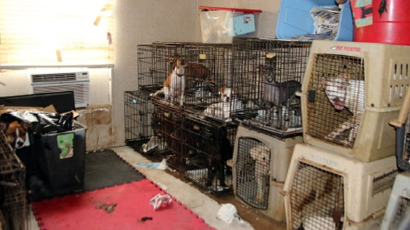 Authorities seize more than 100 animals inside double-wide trailer in Collin County