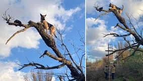 Firefighters rescue dog that chased cat up a tree and got stuck