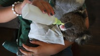 Australian government pledges $50 million in aid for wildlife affected by bushfire crisis