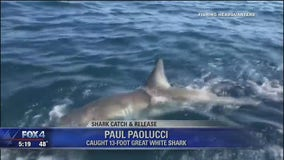 Florida tourist catches 13-foot long great white shark