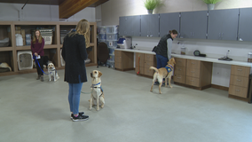Texas senator working to get law passed that would allow therapy dogs in federal courtrooms