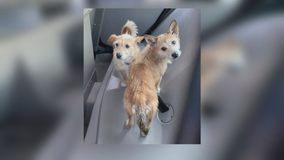 Good Samaritans help Arlington police rescue dogs dumped on side of the road