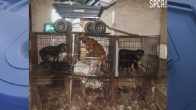 Help sought for 146 animals seized from Hunt County property