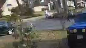 Armed neighbor shoots dog attacking Arlington woman