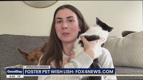Operation Kindness Wish List for Foster Pets