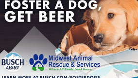 Busch offering 3-month beer supply incentive to adopt dog from rescue during COVID-19 crisis