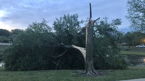 Overnight storms, wind gusts of up to 70 mph lead to tree and fence damage