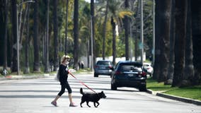 CDC indicates that people can spread novel coronavirus to pets in some situations