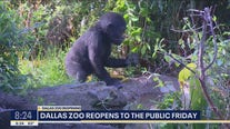 Dallas Zoo ready to reopen to the public Friday