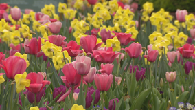 Dallas Arboretum to reopen in limited capacity on June 1
