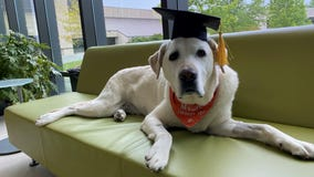 Therapy dog who has helped thousands of students awarded honorary doctorate from Virginia Tech