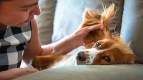 Mark your calendar: National Dog Mom's Day is May 9