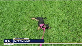 Pet of the Day: Minnie