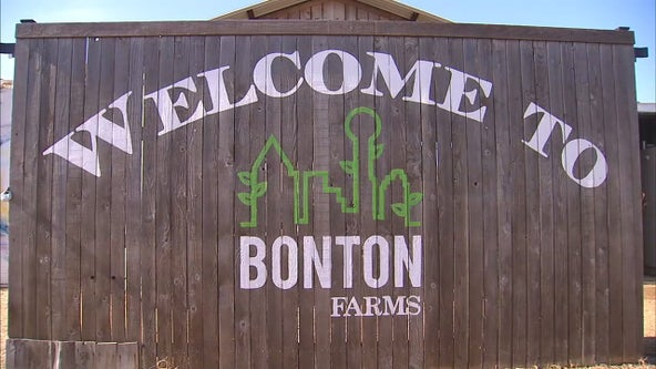 Urban farm pilot program in the works to help Dallas homeless population