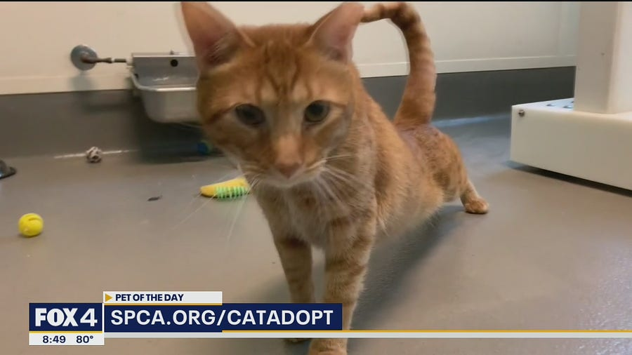 Pet of the Day: Samuel
