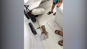 'Can't say you see that everyday': Crew 'catches' cat stuck in open ocean during fishing trip