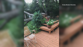 High winds bring down trees, knock out power in parts of North Texas