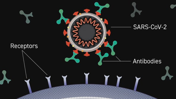 Clinical trial underway at Baylor Scott & White on lab-manufactured COVID-19 antibodies