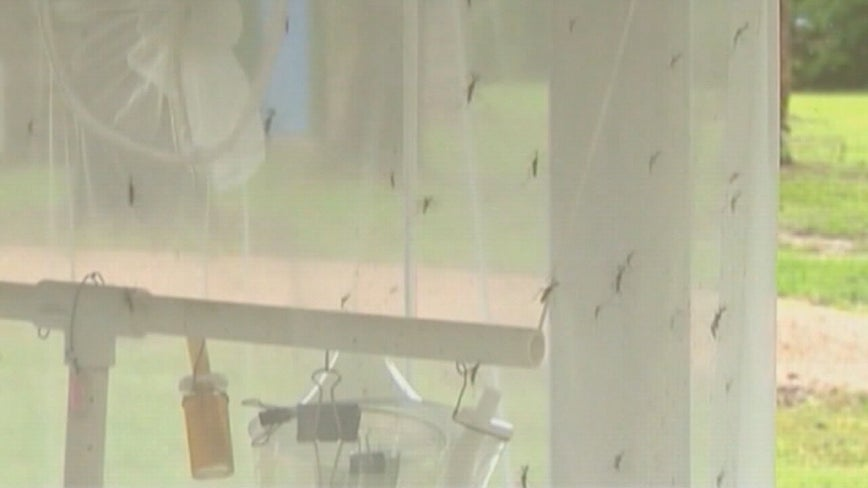 West Nile virus threat grows in Tarrant County, health officials warn