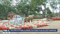 Pumpkins return to Dallas Arboretum for fall festival