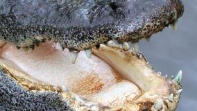 Florida man survives alligator attack while walking dog, gets 65 stitches