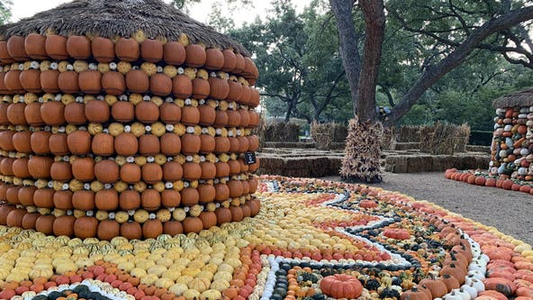 'Autumn at the Arboretum' kicks off this weekend at Dallas Arboretum