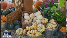 Fall Planting Tips