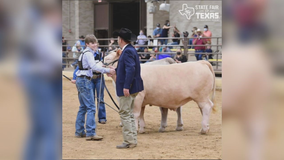 Youth livestock auction happening Friday at State Fair of Texas