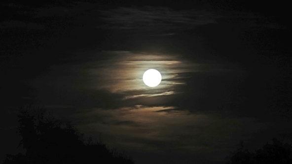 Rare Halloween 'blue moon' will light up the sky tonight