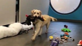 Happy 'howlidays': Shelter dogs pick out their own toys for Christmas