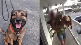 Deputies: Dog OK after being tossed from motel balcony; owner arrested