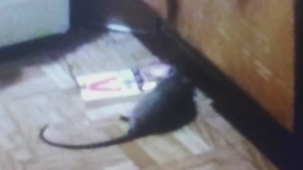 Houston mom living in car with 3 kids because of rat infestation at apartment