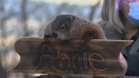 Dallas Arboretum's groundhog predicts 6 more weeks of winter in North Texas