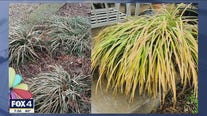 How to save your winter storm-damaged plants