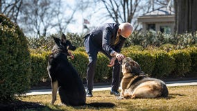 Biden's dog Major involved in another biting incident at the White House