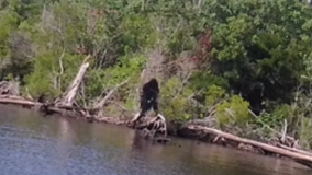 $2 million bounty placed on Bigfoot in Oklahoma town: Must be captured alive and unharmed