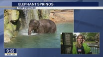 New Elephant Springs habitat opens at the Fort Worth Zoo