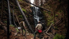 BEFORE-AND-AFTER PHOTOS: Resilient redwood forest beacon of hope for California forest
