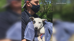 Puppy found stuck in SUV adopted by Dallas firefighter who rescued her