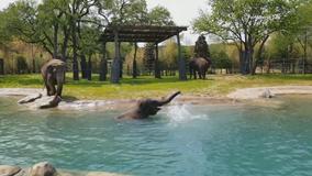 New elephant habitat opens at Fort Worth Zoo